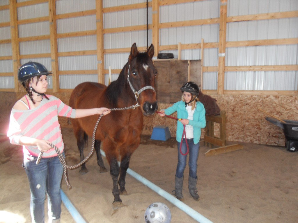 equine connection eal