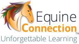 Equine Connection